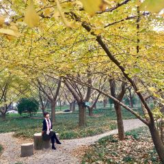 Ancient Ginkgo Forest Park User Photo