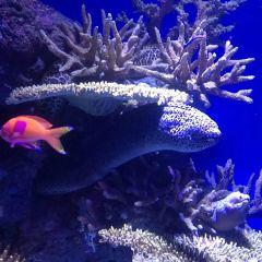凱恩斯水族館用戶圖片