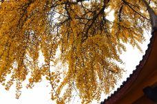龙兴寺-彭州-M36****407