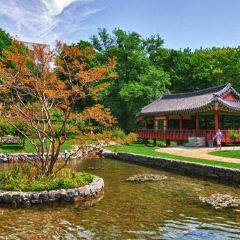 中國花園用戶圖片
