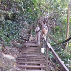 Monkey Trail User Photo