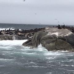 海豹島用戶圖片