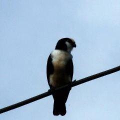 Deramakot Forest Reserve用戶圖片