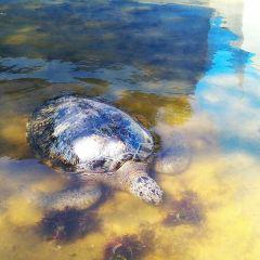 Turtle Island User Photo