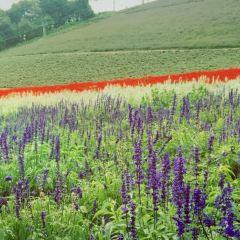 Choei Lavender Park User Photo