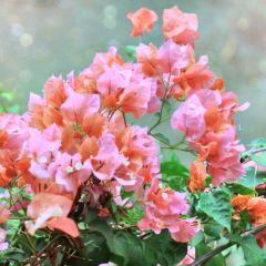 Veale Gardens User Photo