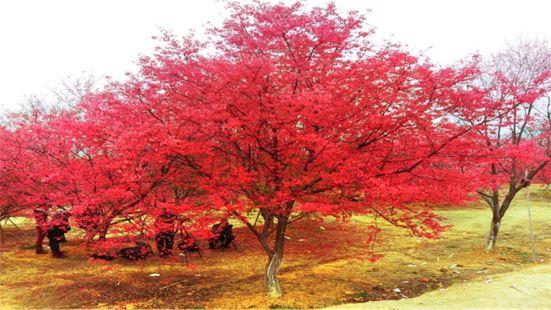 桂陽櫻花園