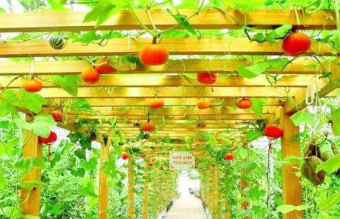 Beidahuang Modern Agricultural Garden
