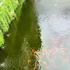 古川町橋用戶圖片