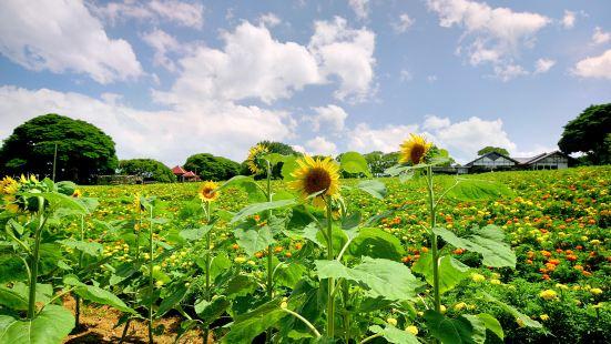 能古島海島公園(Nokonoshima Island Park)