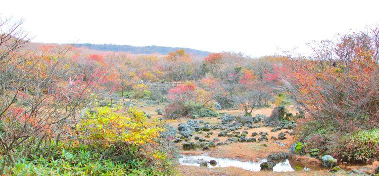 1100 Highland Wetland