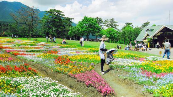 쿠쥬 꽃 공원