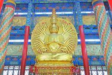 南海禅寺-汝南-尊敬的会员