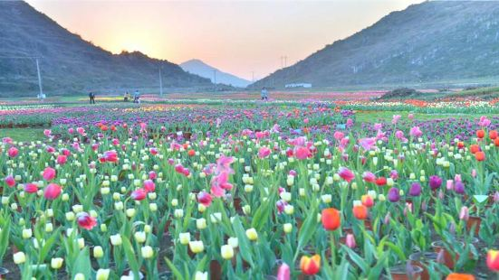 The Flower Sea of Qin