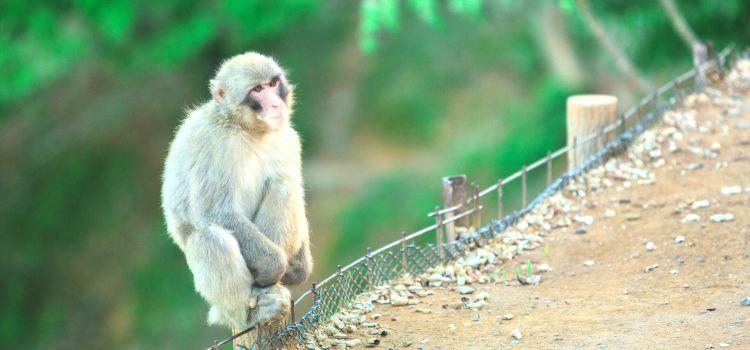 嵐山岩田山猴子公園