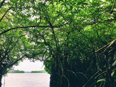 Mangrove Cave