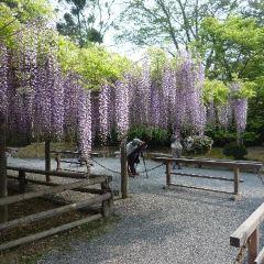 Hijiyama Park User Photo