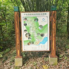 첸다오후 삼림산소방(천도호 삼림양파) 여행 사진