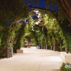 Hemisfair Park用戶圖片