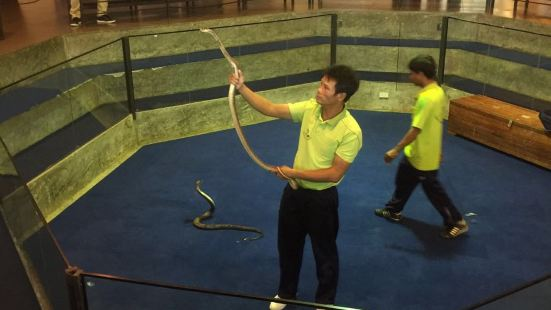 Phuket Snake Show