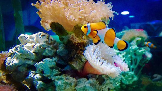 Beijing Underwater World Exhibition