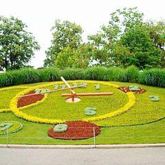 Flower Clock User Photo