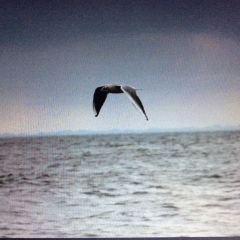 Moesgaard Strand User Photo