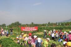 田心草莓园-从化区-用户45224