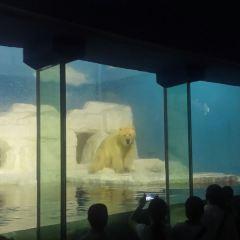 老虎灘極地海洋動物館用戶圖片