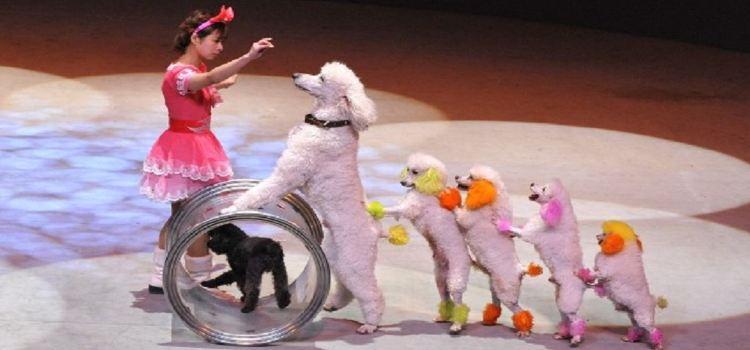 Happy Circus Theater1
