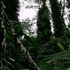 Akaka Falls State Park User Photo