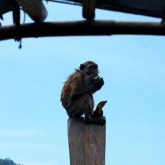蘭塔紅樹林公園用戶圖片