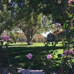 Lyndoch Hill Rose Garden User Photo