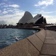 Sydney Harbour User Photo
