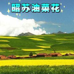 昭蘇油菜花用戶圖片