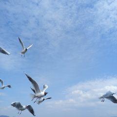 Qilu Lake User Photo
