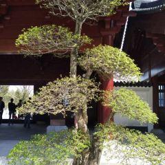 니우서우산 문화관광지(우수산 문화관광지) 여행 사진
