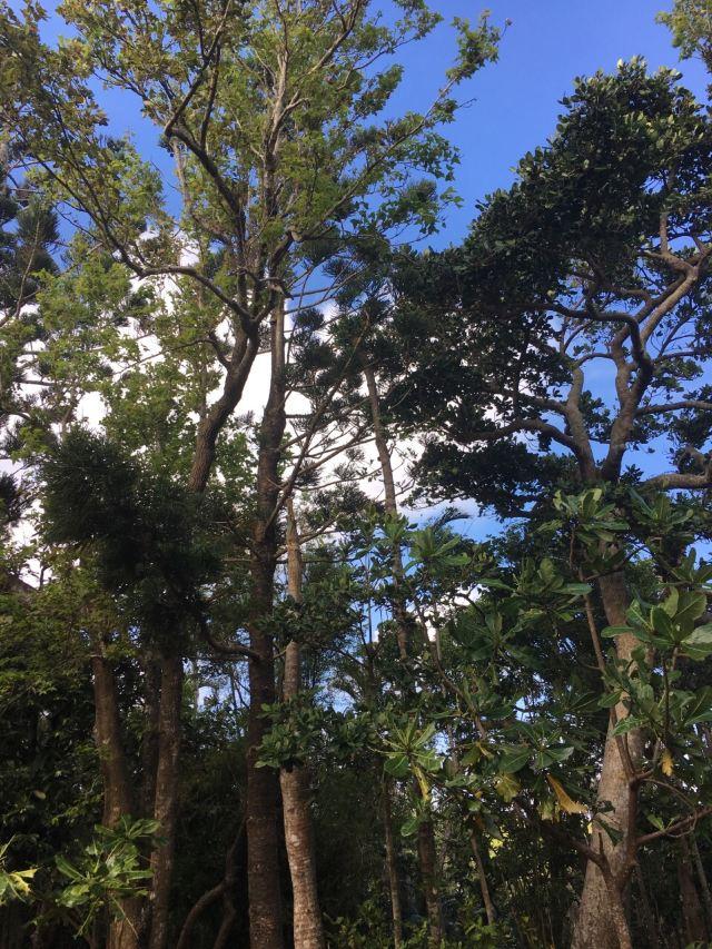 墾丁國家森林遊樂區
