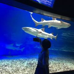 Grandview Aquarium User Photo