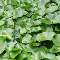 Nandai River Daguanyuan User Photo