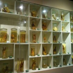 竹文化園用戶圖片