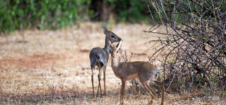 Samburu National Reserve1