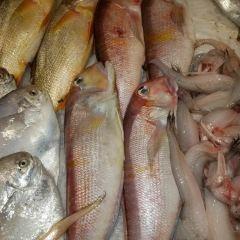 燕窩山莊平價海鮮漁家民宿用戶圖片