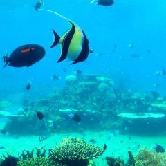 치취 해양세계 여행 사진