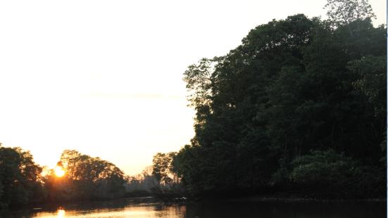 汶萊河紅樹林