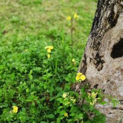 Ersha Island User Photo