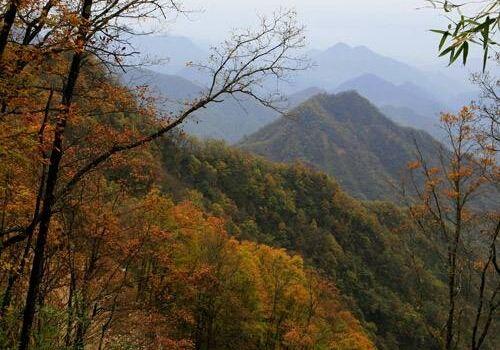 鬼谷嶺國家森林公園1