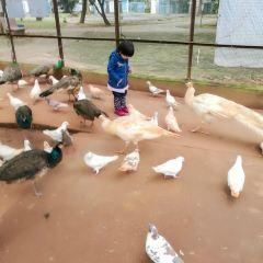 진뉴링 공원 여행 사진