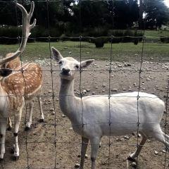 柳岸野生動物保護區用戶圖片