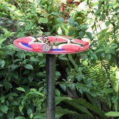 Butterfly Park & Insect Kingdom User Photo